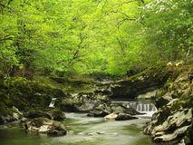 Forest by a river Stock Image