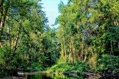 Forest River fotografia stock