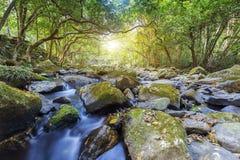 Forest River Stock Fotografie