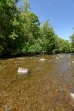 Forest River Imágenes de archivo libres de regalías