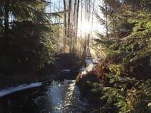 Forest River Stockbilder