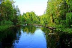 Forest River Foto de archivo libre de regalías