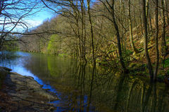 Forest and river. Royalty Free Stock Photography