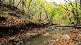 Forest River stock footage