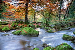 Forest River Fotografia Stock Libera da Diritti