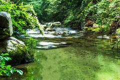 Forest River Imagens de Stock Royalty Free