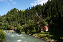 Forest and river. The scene of sinkiang .looks very beautiful Stock Photos