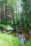 Forest River Stockfoto