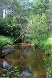 Forest River Immagini Stock