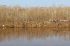 Forest River Stock Afbeeldingen
