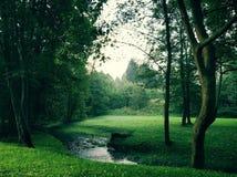 Forest River foto de stock