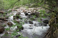 Forest river. Saja river of Cantabria forest , Spain Stock Photos