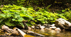 Forest River Imagem de Stock Royalty Free