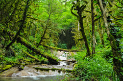 Forest River Photographie stock
