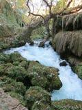 Forest River Lizenzfreie Stockfotografie