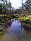 Forest River Lizenzfreies Stockfoto