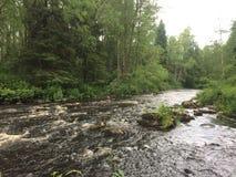 Forest River Royaltyfria Bilder
