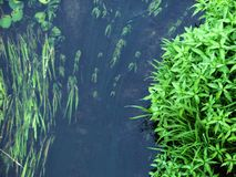 Forest river algae Stock Image