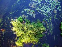 Forest river algae Royalty Free Stock Photos