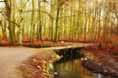 Forest and river in autumn Stock Images