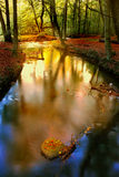 Forest river in autumn stock photos
