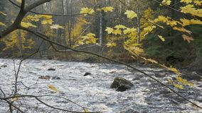 River with rapids in the autumn forest