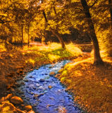 Forest river in autumn sunshine Royalty Free Stock Images