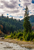 Forest river in autumnal countryside Royalty Free Stock Images