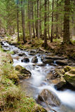 Forest river. Beautiful landscape with forest river rapid stock images