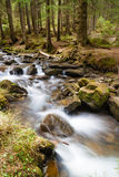 Forest river. Beautiful landscape with forest river rapid royalty free stock image