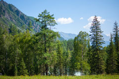 Forest, and the river behind him. Trekking in the Altai Mountains Royalty Free Stock Image