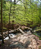 Forest River with Bridge Royalty Free Stock Photos