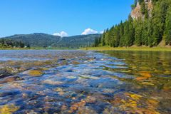 Forest river with clear water and rocky bottom stock images