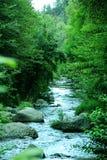 Forest River Creek Sedona, Arizona imagen de archivo libre de regalías