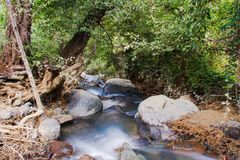 Forest and river in Cyprus Royalty Free Stock Image