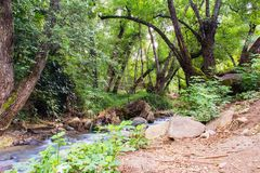 Forest and river in Cyprus Stock Images