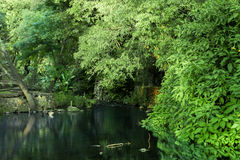 Forest river Stock Photography