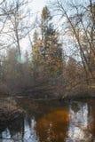 Forest River in de vroege lente bij zonsondergang stock afbeelding