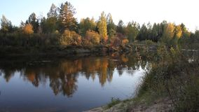 Forest and river in the evening stock video