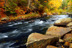 Forest river in the fall Royalty Free Stock Photo