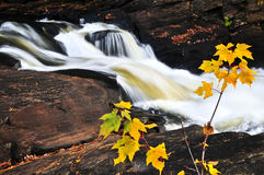 Forest river in the fall Royalty Free Stock Photography