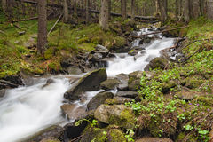 Forest river. Fast forest river flowing among mossy stones stock photos