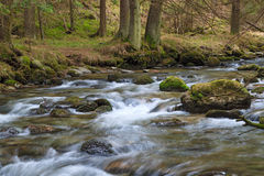 Forest river. Fast forest river flowing among mossy stones royalty free stock photography