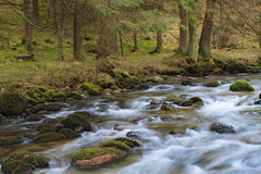Forest river. Fast forest river flowing among mossy stones royalty free stock photos