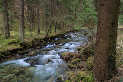 Forest river. Fast forest river flowing among mossy stones stock image