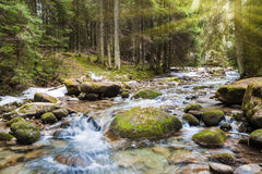 Forest river. Fast forest river flowing among mossy stones stock photo