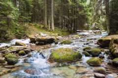 Forest river. Fast forest river among stones stock photo