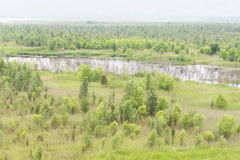 Forest and river  in the field Royalty Free Stock Photography