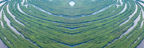 Forest river in flooding, top view Royalty Free Stock Photo