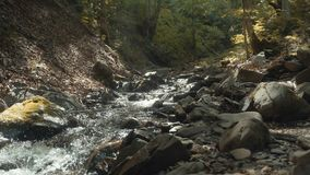 Forest River Flow stock footage